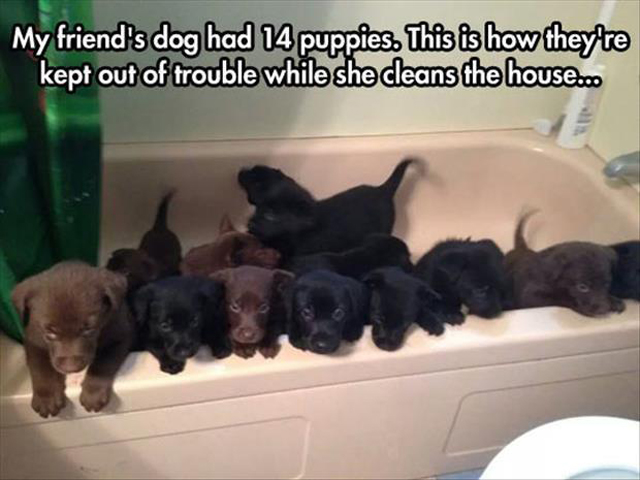 cute puppies in a tub