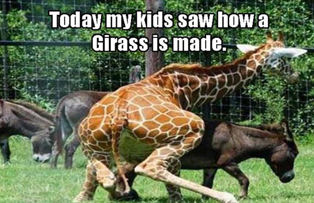 How a Girass is made